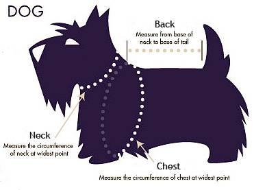 Dog Clothing Size Chart Free Shipping
