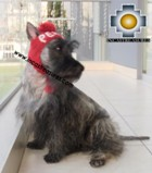 Alpaca Hat for Dogs PERU DOG - Product id: dog-clothing-11-01 Photo03