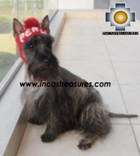 Alpaca Hat for Dogs PERU DOG - Product id: dog-clothing-11-01 Photo02