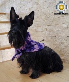 Alpaca Kerchief for Dogs Bonnie