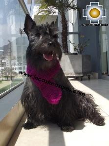 100% Alpaca Wool Scarf for Dog ALQU - Extra Soft