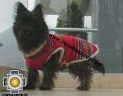 Dog Clothing Apparel Inka - Product id: dog-clothing-10-05 Photo04