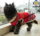 Dog Clothing Apparel Inka - Product id: dog-clothing-10-05 Photo06