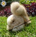 Alpaca Stuffed Animal Squirrel Nuez - Product id: TOYS08-57 Photo05