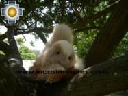 Alpaca Stuffed Animal Squirrel Nuez - Product id: TOYS08-57 Photo03