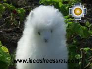 Baby White Alpaca - pastoruri - Product id: TOYS08-32