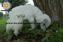 Alpaca Stuffed Animals Sheep Family - Product id: TOYS08-39 Photo04