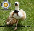 Cute and Elegant Ostrich - Puqui , photo 04